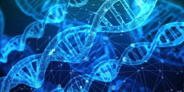 Un nouveau graphisme des gènes devrait moins déconcerter Excel