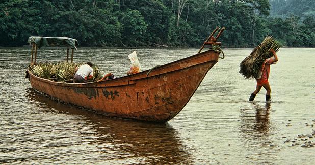 Amazonie: Bolsonaro rétablit les plantations de canne à sucre, une menace pour la biodiversité