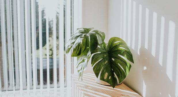 10 astuces pour rafraîchir sa maison naturellement