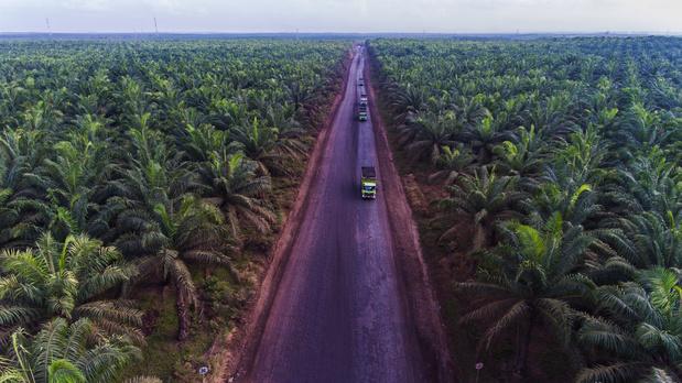 Duurzame palmolie: WWF rangschikt beste en slechtste leerlingen van de klas