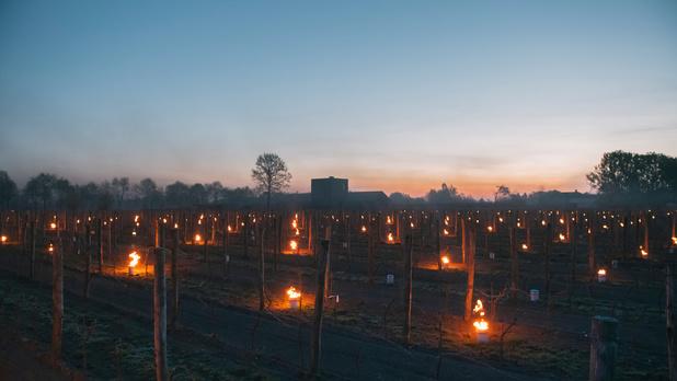 Kaarsen in de wijngaard: Belgisch domein redt oogst van nachtvorst