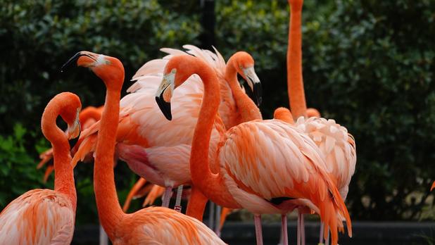 Trakteer de dieren in de zoo eens op een etentje