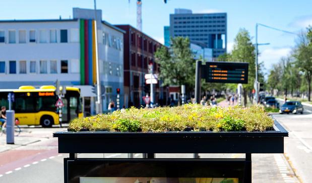 Bijzondere bushaltes: Utrecht kiest voor bijvriendelijke daken