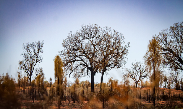 Sommige dieren en planten profiteren van bosbranden in Australië