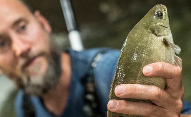 Duurzame viskwekerij: 'We kweken vegetarische vis zonder waterverspilling'