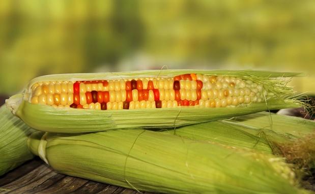 Nouvelle opposition du Parlement européen à l'autorisation d'importation de produits OGM