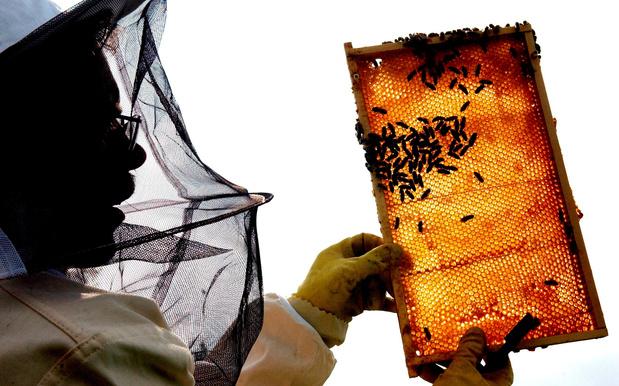 Du miel pour éviter les infections des mailles chirurgicales