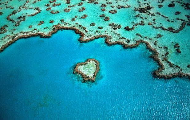 La Grande Barrière vient de vivre son pire épisode de blanchissement de coraux en Australie
