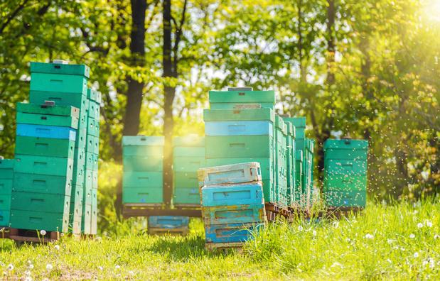 Bijen houden ontbossing tegen in Malawi