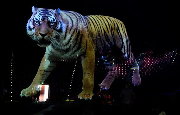 """Zoo: Des animaux sauvages en 3D dans le  """"plus grand cinéma holographique du monde"""""""