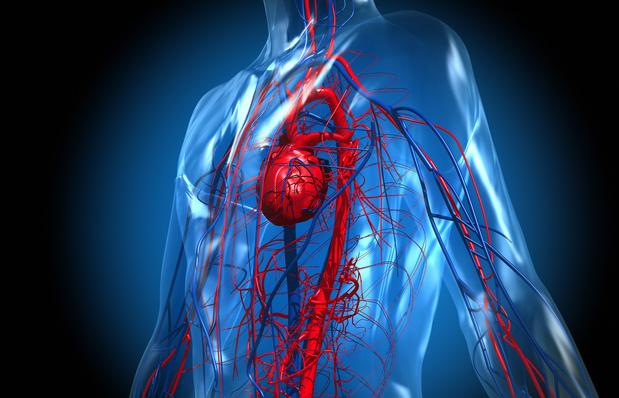 UA zoekt 65-plussers voor onderzoek over veroudering bloedvaten