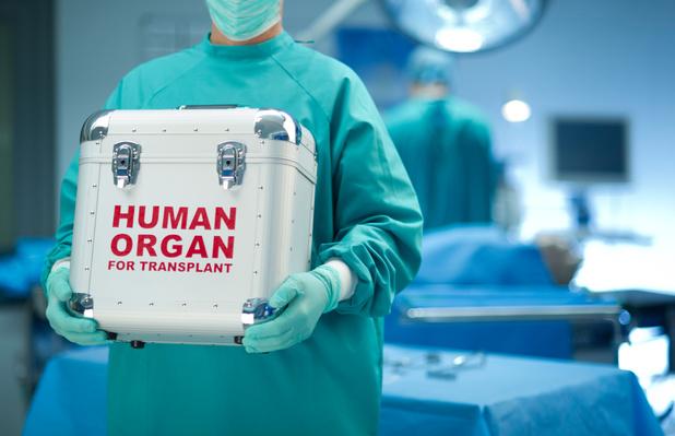 """Les """"sénolytiques"""" favorisent la survie des organes âgés après la greffe"""