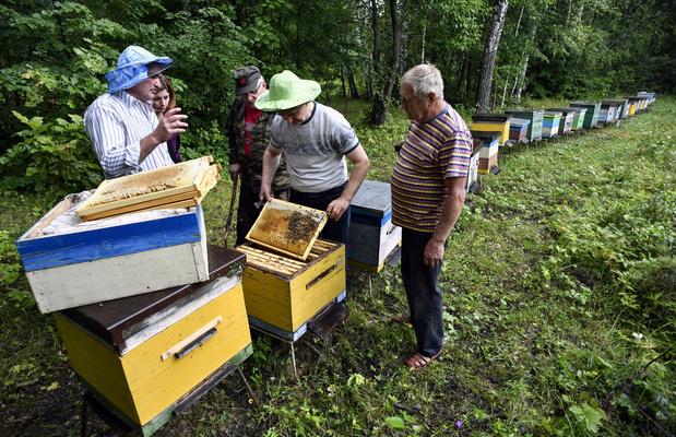 Hécatombe dans les ruches de Russie