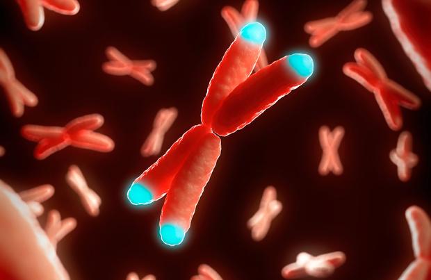 La forme sévère du Covid pourrait être déterminée par nos chromosomes