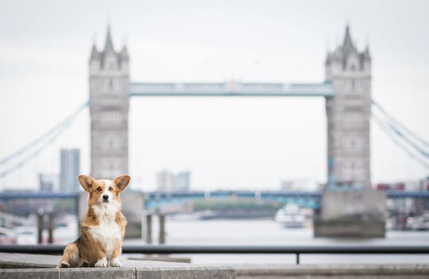 """Londres: """"After Bark"""", un bar où on sert des cocktails aux chiens"""
