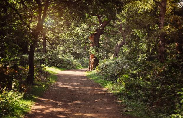 Sherwood: la forêt de Robin des Bois envahie par les naturistes