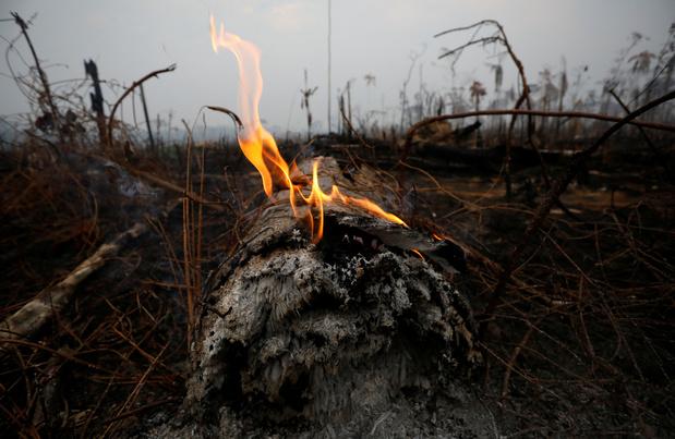 """""""Les incendies en Amazonie pourraient être le début d'un scénario catastrophe"""""""