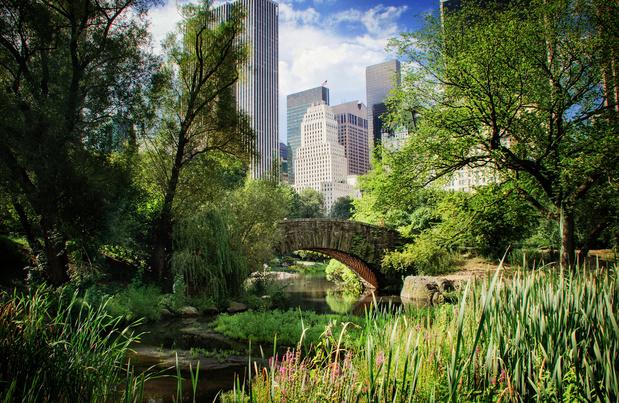 Six astuces pour se reconnecter à la nature, même en ville
