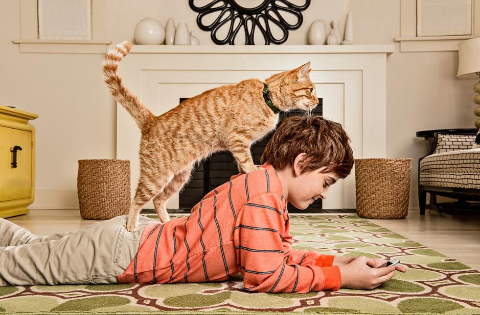 Hoe huisdieren ons redden van de eenzaamheid: 'Een dier maakt van een huis een thuis'