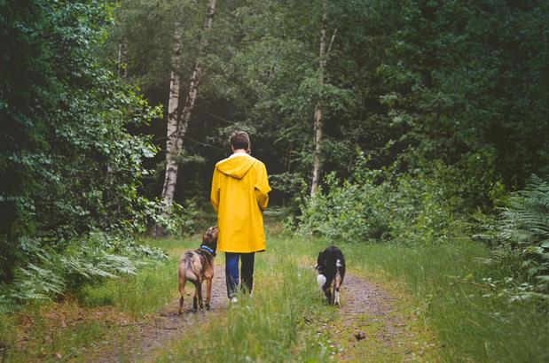 Wandelen in de natuur geeft humeur en geluksgevoel een boost