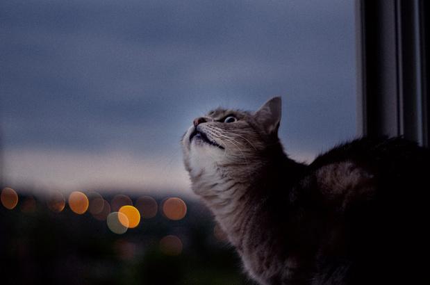 Avondklok voor katten