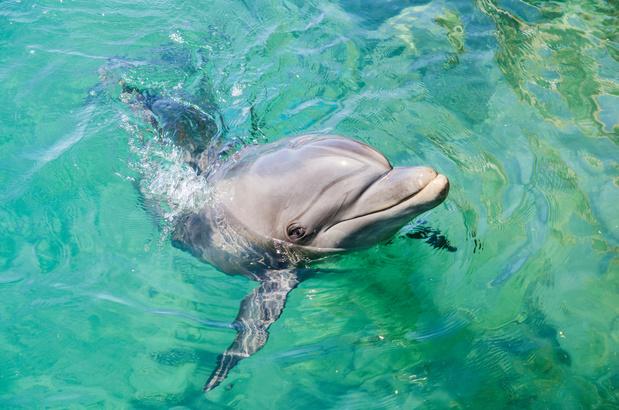 Les dauphins de retour dans un port de Sardaigne (VIDEO)