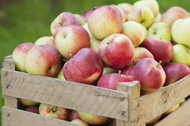 Récolter pommes et poires, tout un savoir-faire