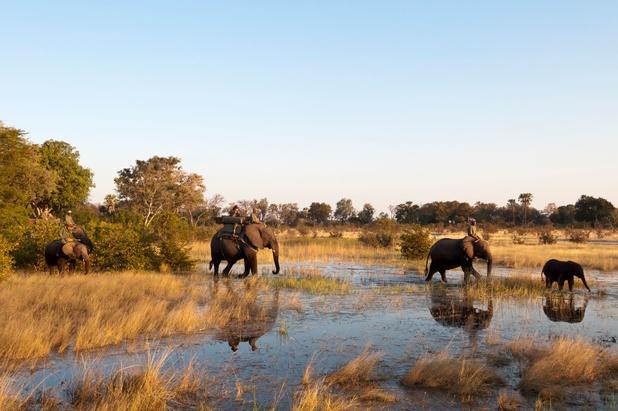 L'Afrique australe pour une stratégie commune de protection des éléphants