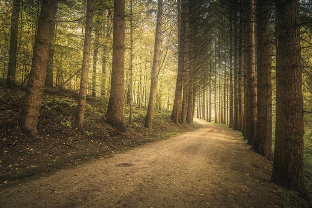 Een op de vier Belgen denkt deze zomer op vakantie te gaan
