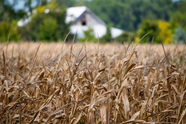 Europees rapport: landbouw krijgt klappen door klimaat