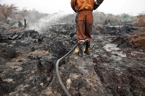 Multinationals blijven massaal palmolie kopen uit gebieden waar illegale branden woeden