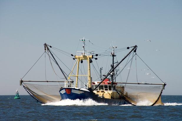 Nederlandse onderzoekers: 'vissen met elektriciteit maakt géén kerkhof van de zee'