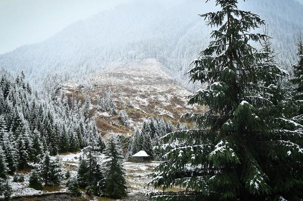 Menace sur les forêts roumaines et leurs gardiens (en images)