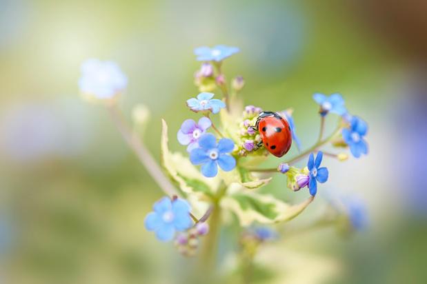 Insectenweek benadrukt het nut van insecten