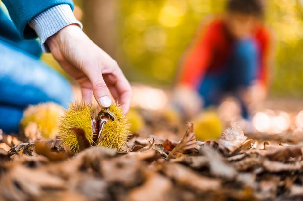 Dorp in Ardennen krijgt eetbare plukroute