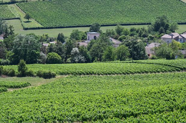 Chardonnay, ce village français qui veut sortir de l'ombre de son illustre cépage