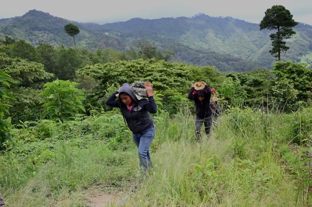 Des petits planteurs de café guatémaltèques songent à repartir aux Etats-Unis