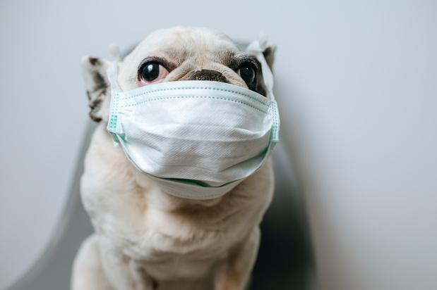 L'Afsca étudie le risque coronavirus chez les animaux de compagnie