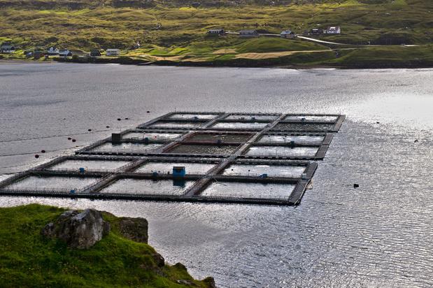Le Danemark va limiter l'aquaculture en mer