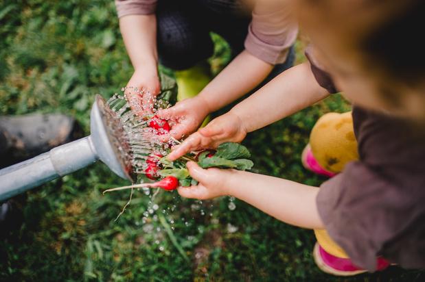 Van plukbomen tot kroketten: dit zijn de genomineerden voor de Food Waste Awards 2020