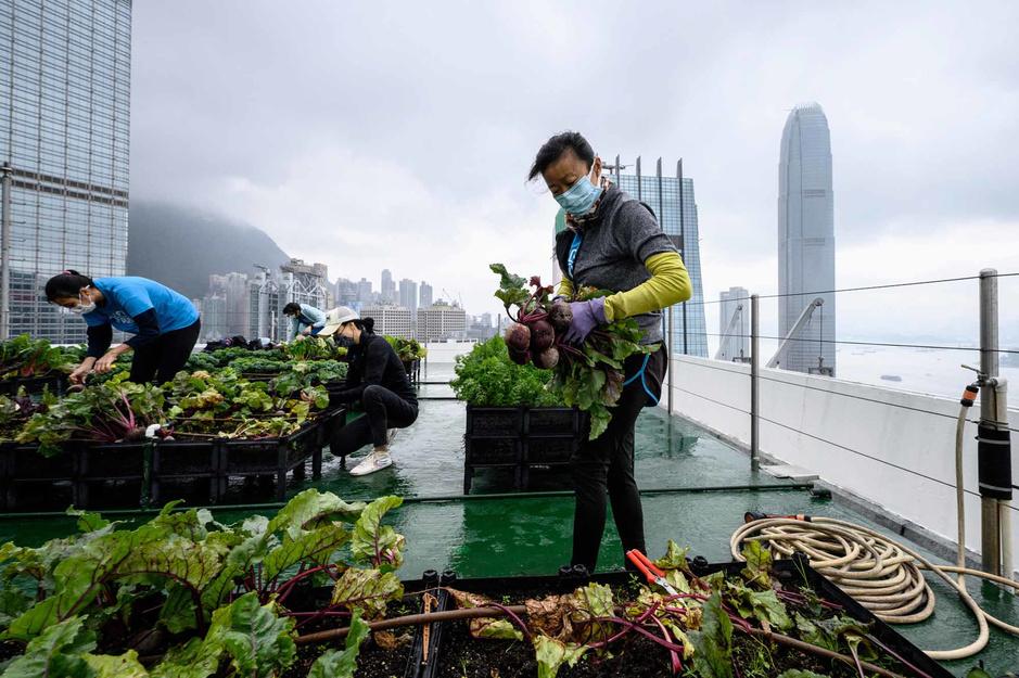 Hong Kong: un potager dans les nuages (en images)