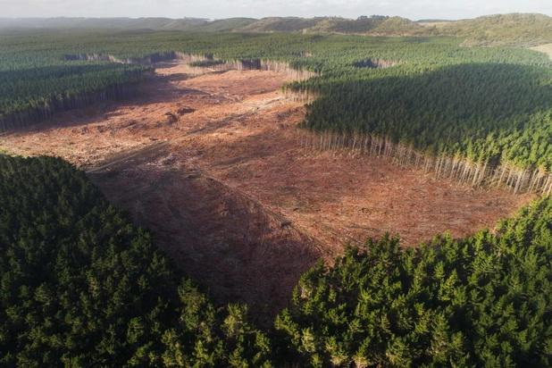 La déforestation se poursuit à un rythme préoccupant