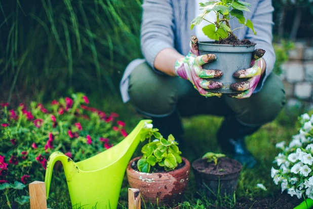 L'urine, un engrais naturel pour vos plantes