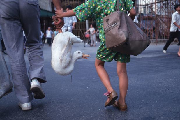 Covid-19 betekent einde van handel en consumptie wilde dieren in China