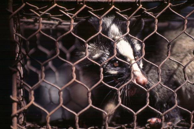 WHO pleit voor wereldwijd verbod van verkoop levende wilde zoogdieren op markten