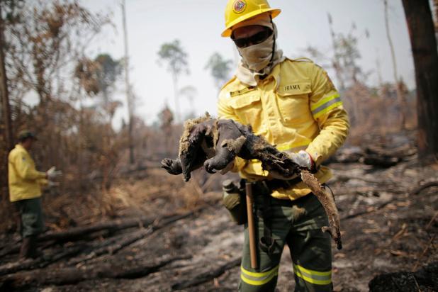 2020 wordt dramatisch jaar voor regenwoud in Brazilië