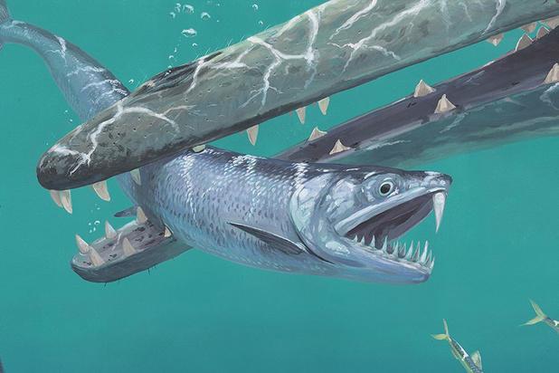 Ansjovissen waren ooit tot een meter groot en hadden slagtanden