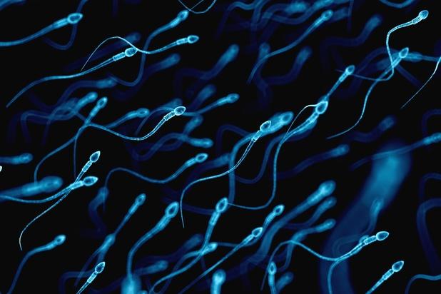 Certaines bactéries sont bénéfiques pour le sperme