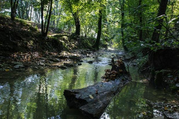 Quatre-vingts-sept pourcent des cours d'eau flamands sont de mauvaise qualité