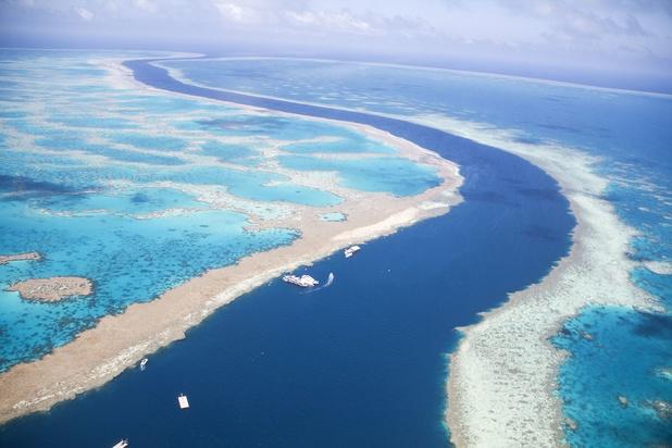 Australie: les coraux les plus au sud du globe touchés par le blanchissement